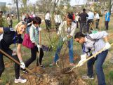 Chef de Mission Susie O'Neill getting her hands dirty planting trees at the site of the Youth Olympic sports park.