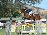 Jake Hunter flies among the koalas. Jake is Australia's representative in equestrian at the 2014 Youth Olympic Games in Nanjing, China.